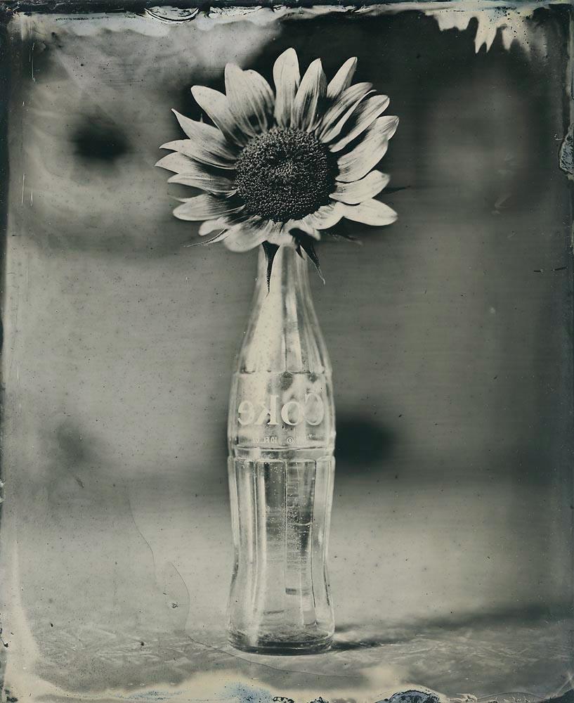 Coke Bottle Sunflower