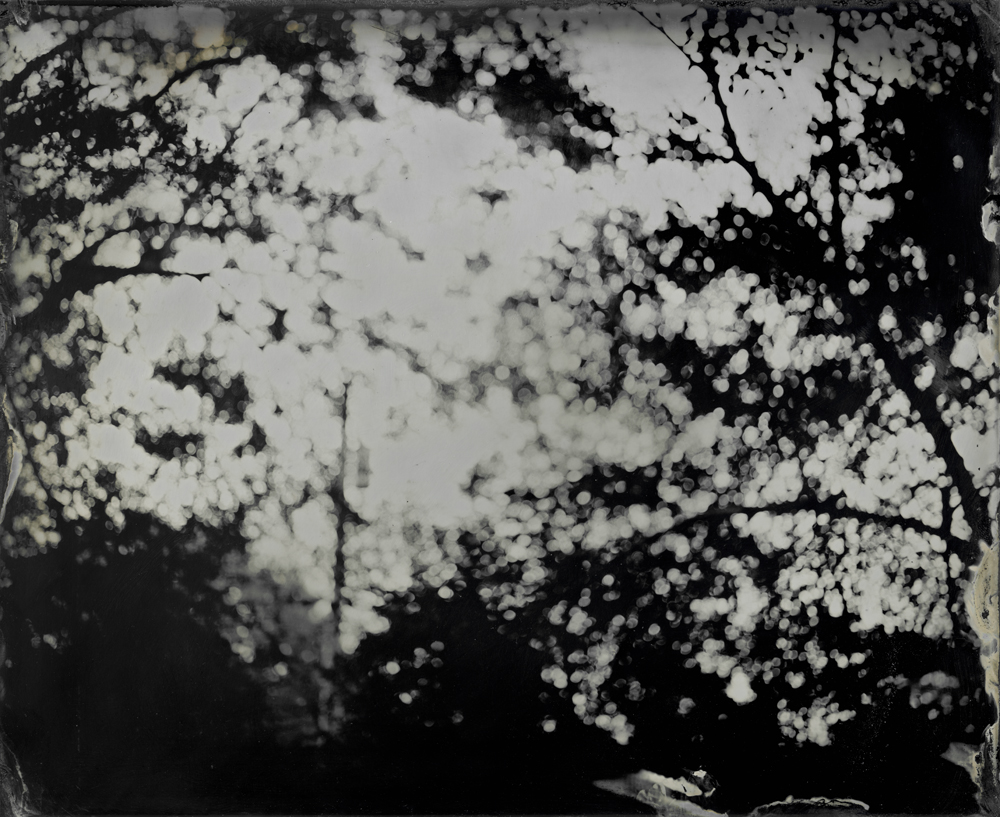 Blurred Trees - Tintype Photograph