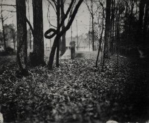 Crooked Dogwood - Tintype Photograph